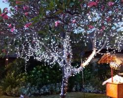 Fairy Light tail on trees