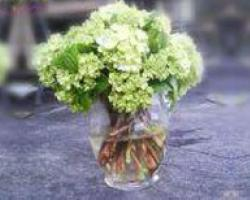 simple green hydrangea centerpiece